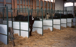 Equine Equipment Jk Reid